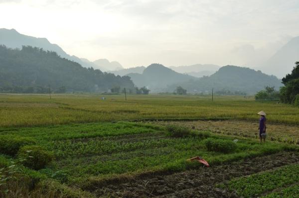Mai Chau (265)